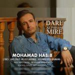 محمد حبیب داره از پیشم میره